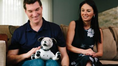 Photo of Aibo robot dogs and the people who love them