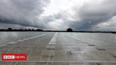Photo of Hello-tech greenhouses to supply United kingdom merchants with food stuff
