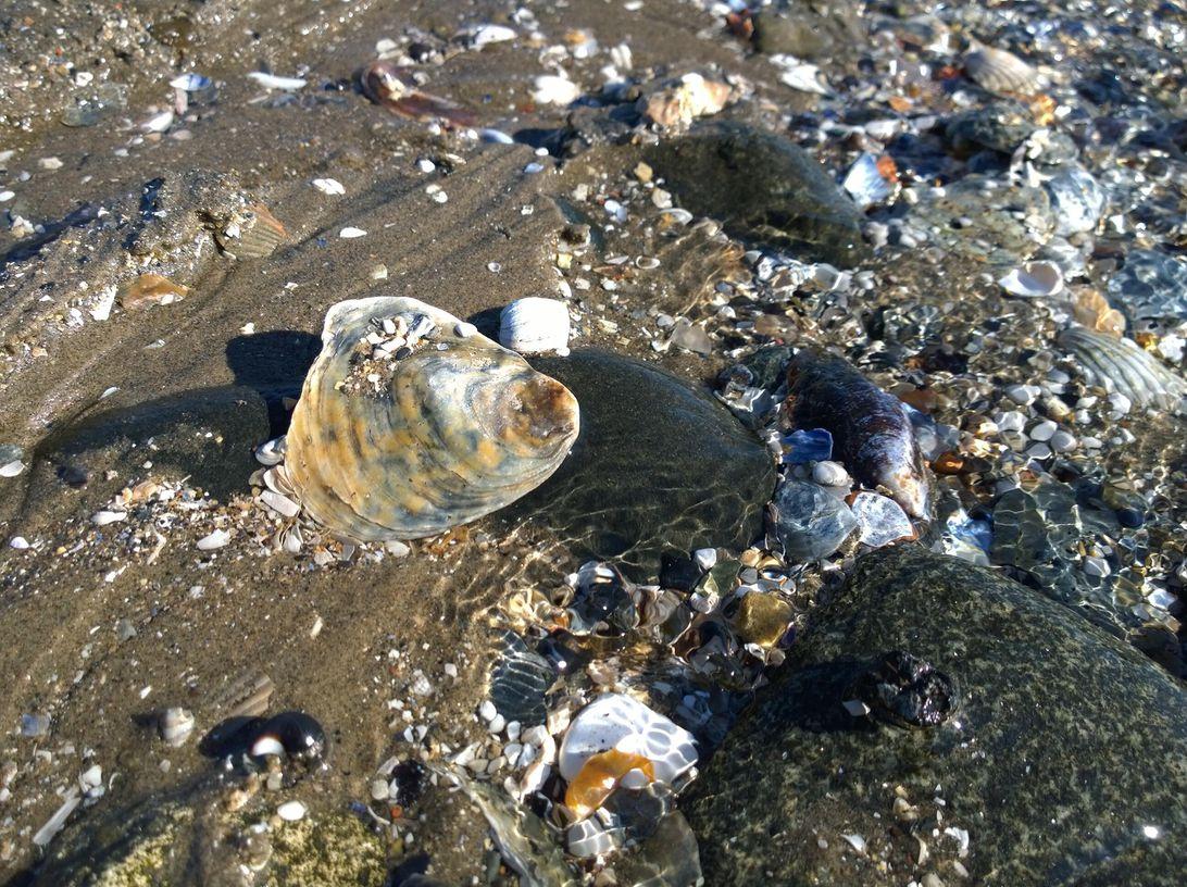 shells-lumia-1020